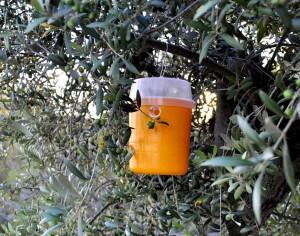 trampa mosca de l'oliva