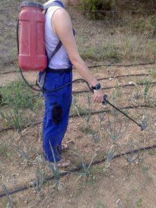 L'aplicació foliar pot ser efectiva si es busca una acció insecticida o antifungica. Font: elaboració pròpia